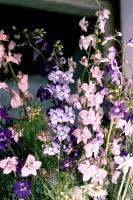 Нарву цветов...