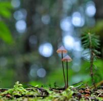 Лесной этюд