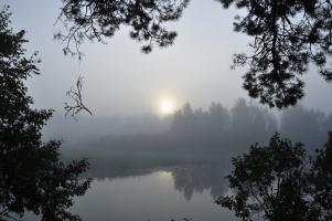 Вышло солнце из тумана...