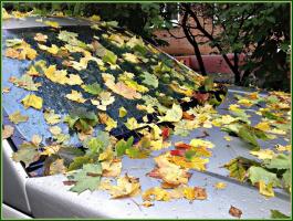 Осень приехала, Осень ...