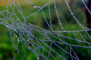 бриллианты для паука