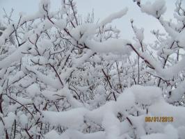 Снежная песня января