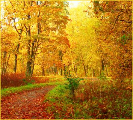 Осень в моем городе!!!